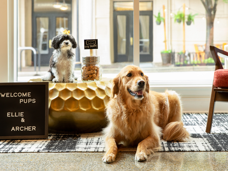 Travel with pets to earn 3K points