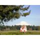 IHG Army Hotel Ft. Lewis-McChord - Mt Rainier from McChord Field