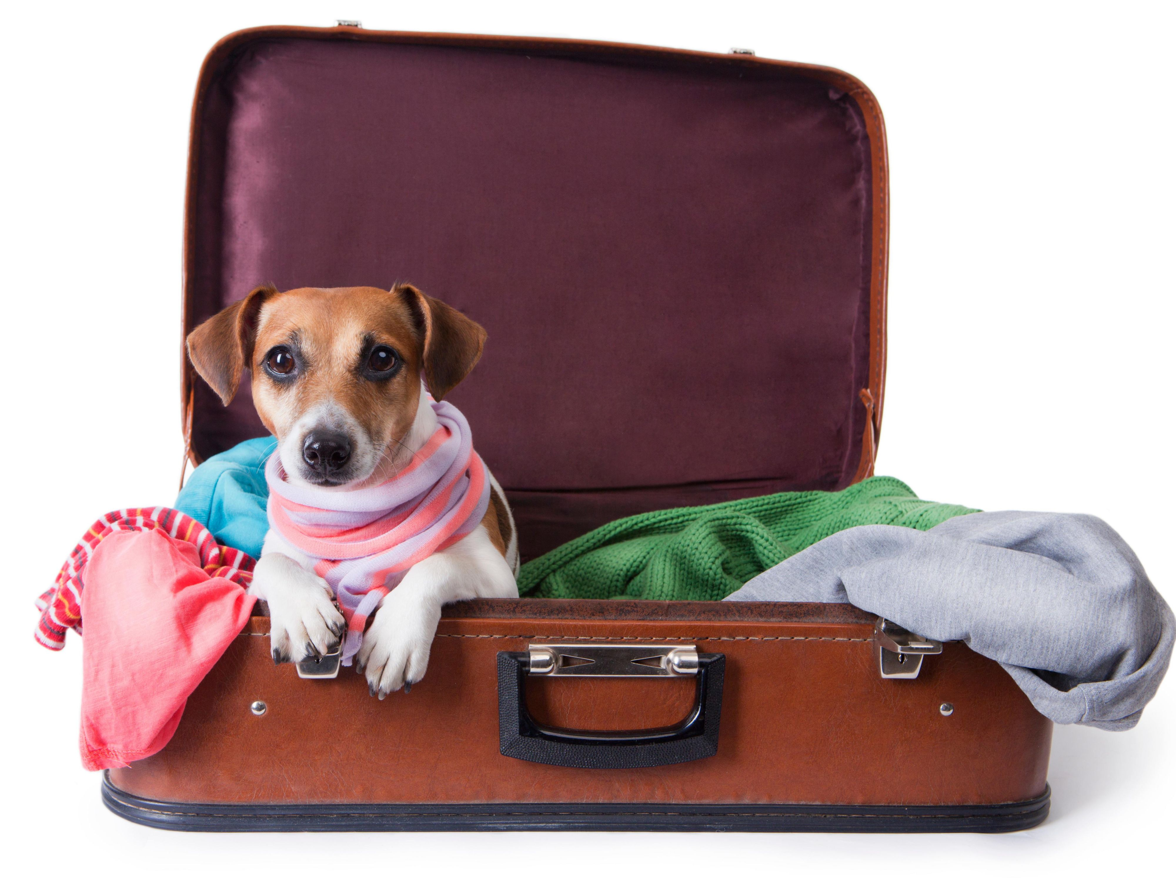 Pets & Points: Fall Deals in NYC
